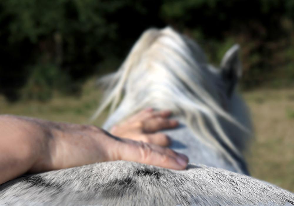 """Britta Gottschalk, CranioSacraltherapie für Pferde, Probleme- er """"fassen"""" und ganzheitlich integrativ therapieren..."""