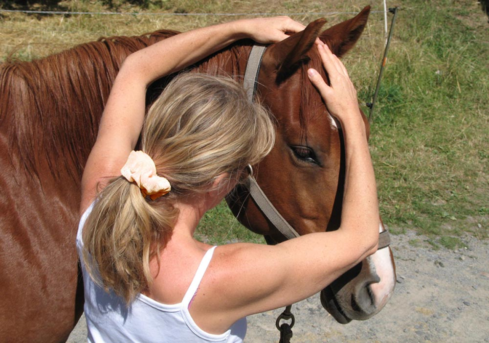 Willkommen im Schulungszentrum CranioSacrale Therapie Pferde, Britta Gottschalk